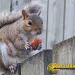 squirrel-2-watermarked